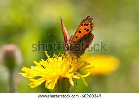 butterfly gather pollen from a flower