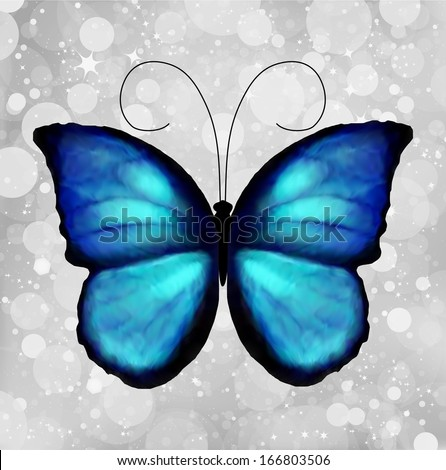 Butterfly in blue and black tones isolated on a silver background - stock photo