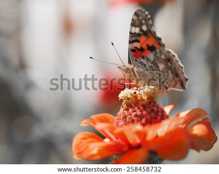 butterfly in natural environment - stock photo