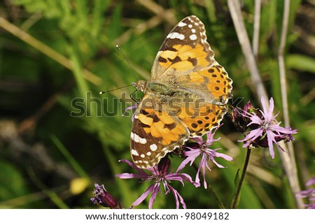 butterfly in the flower - stock photo