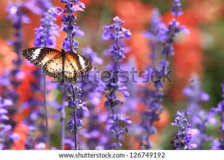 Butterfly in the garden, closeup and shallow DOF. - stock photo