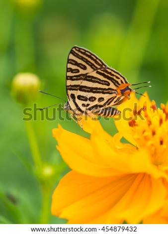 Butterfly insect in natural fresh green garden
