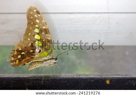 butterfly is staying on the iron bar - stock photo