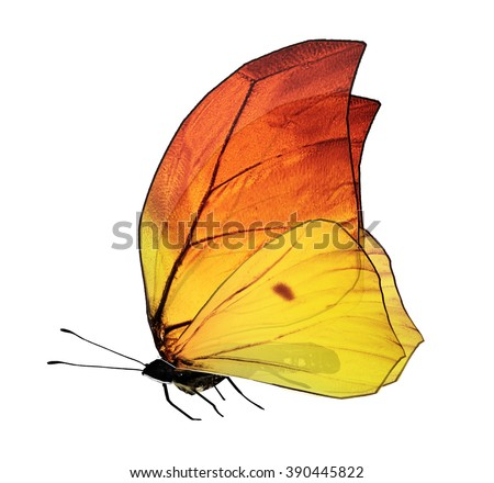 Butterfly, isolated on white background - stock photo
