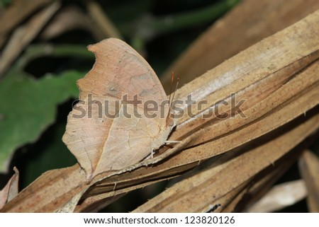 Butterfly leaf. - stock photo