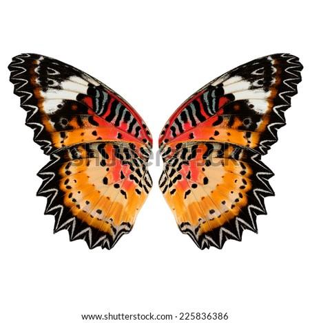 Butterfly,Leopard Lacewing butterfly wing, Malay Lacewing butterfly wing.(Cethosia cyane) - stock photo