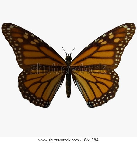Butterfly-Monarch - stock photo