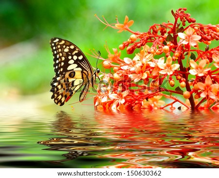Butterfly on a flowe - stock photo