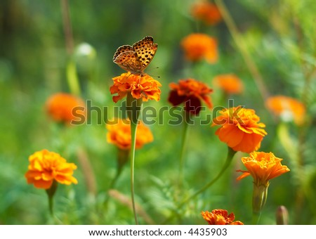 Butterfly on a flower - stock photo