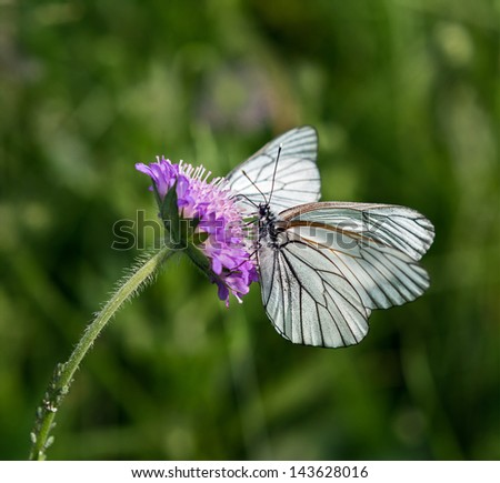 Butterfly on a flower carnations - stock photo