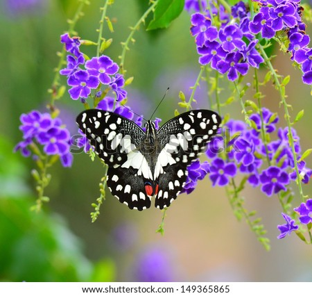 Beau Butterfly On A Violet Flower