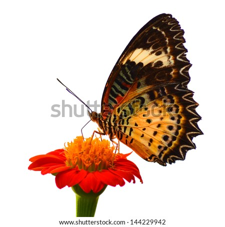 Butterfly on a white background. - stock photo