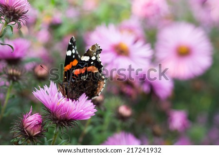 Butterfly on aster - stock photo