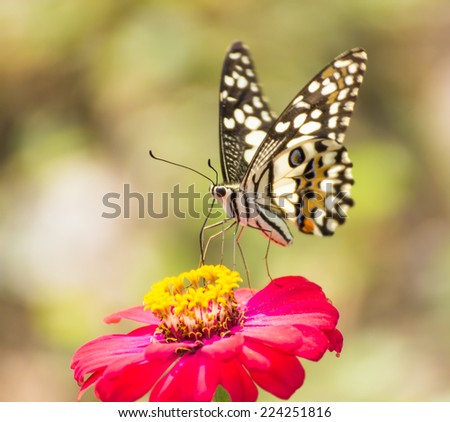 Butterfly on beautiful red flower. plants for butterfly in garden.Nature's Perfect of garden in Thailand .