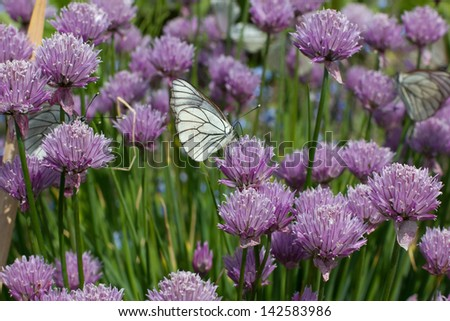 Butterfly on flower. - stock photo