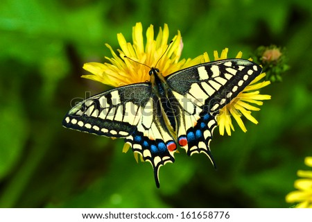 Butterfly on Flower - stock photo