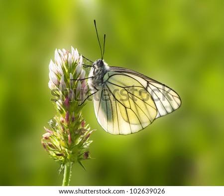 butterfly on flower backlight - stock photo