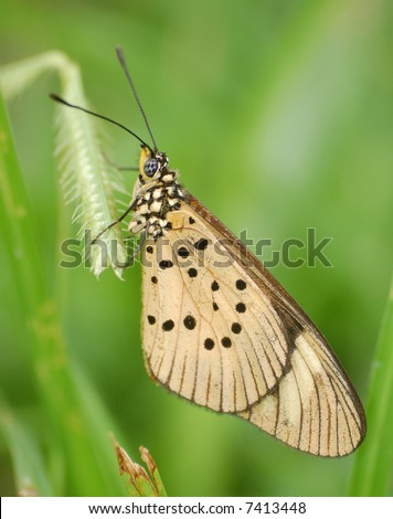 Butterfly on grass - stock photo