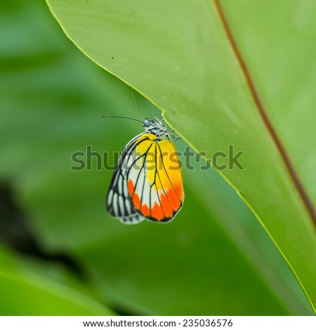 Butterfly on green leaf. - stock photo