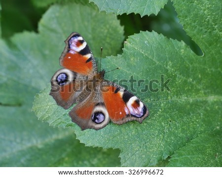 butterfly on green leaf  - stock photo