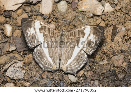 Butterfly on ground.