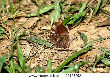 Butterfly on ground in nature