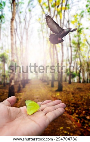 butterfly on hand and bird flying in woodland for background , freedom concept  - stock photo