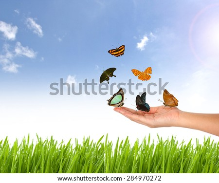 butterfly on Hand and nature blue sky, fresh  green grass background