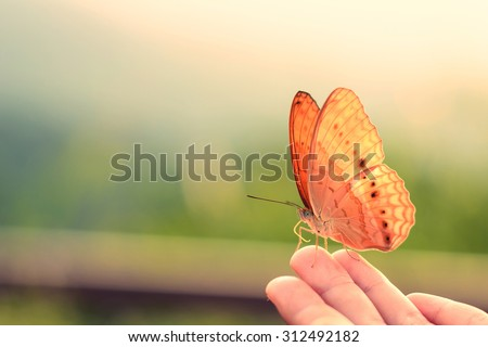 Butterfly on hand in jungle the beauty of nature - stock photo