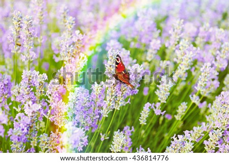 Butterfly on lilac lavender flowers field background, rainbow - stock photo