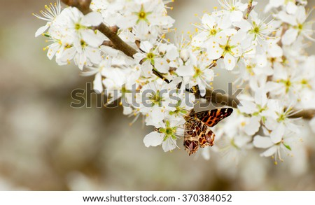 Butterfly on petals