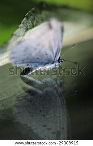 Butterfly on reflecting surface - stock photo