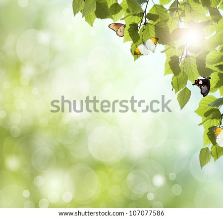 butterfly on the background of the young spring leaves - stock photo