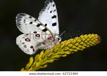 Butterfly on the dark background - stock photo