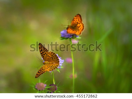 Butterfly on the flower in the meadow - stock photo