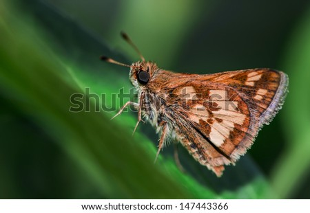 butterfly on the leaf - stock photo