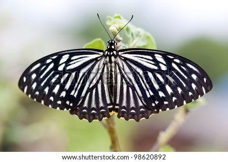 butterfly on the tree - stock photo