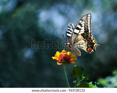 Butterfly over a flower with copy space - stock photo
