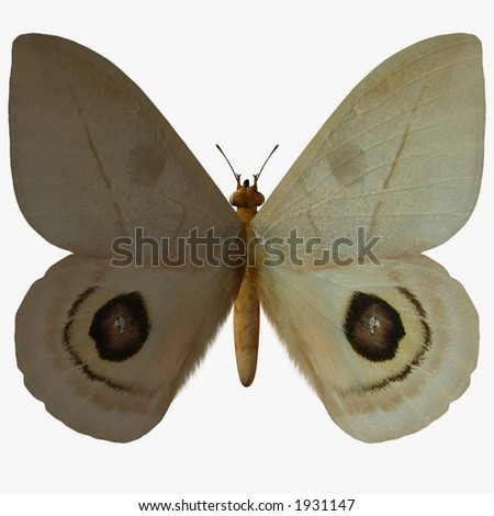 Butterfly-Peeping Tom - stock photo