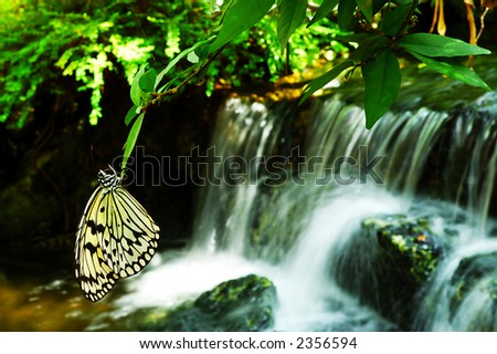 Butterfly rest at leaves near a waterfall - stock photo
