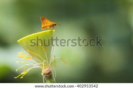 Butterfly rest on waterlily stem - stock photo