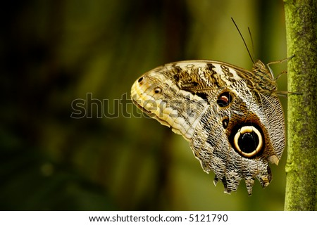 Butterfly resting on a tree branch - stock photo
