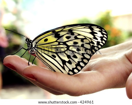 Butterfly resting on woman's hand - stock photo
