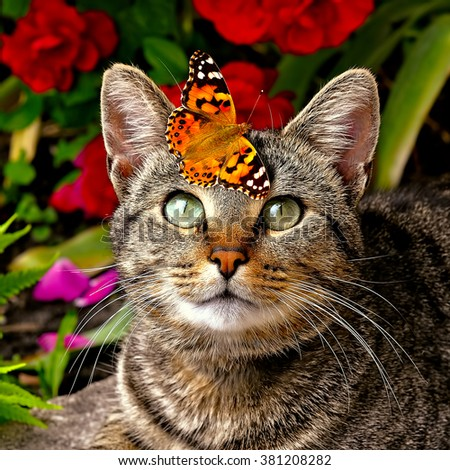 butterfly sitting on tabby cat - stock photo