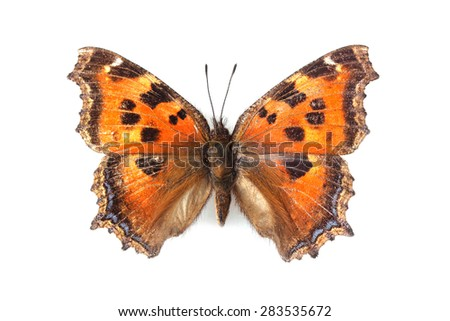 Butterfly - Small Tortoiseshell (Aglais urticae) isolated on white - stock photo