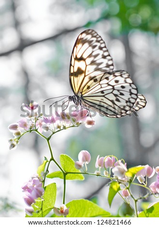 Butterfly sucking the nectar from flowers. - stock photo