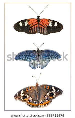 Butterfly Trio Isolated on White Background with Border - stock photo