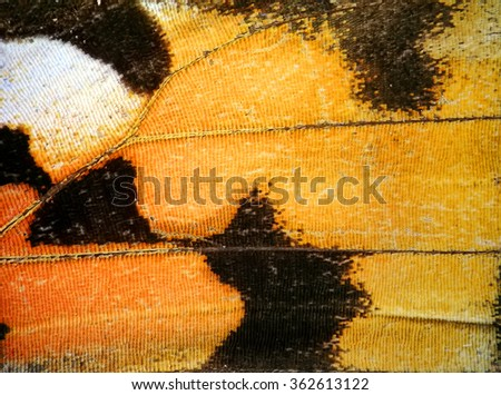 Butterfly wing natural texture background - stock photo