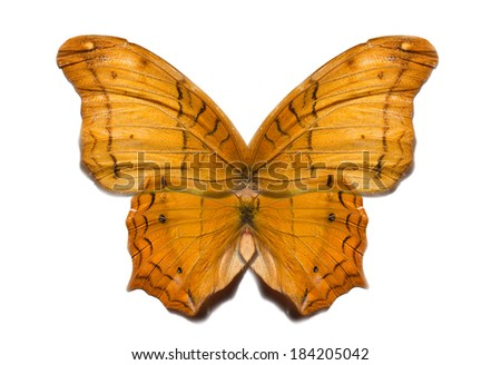 butterfly wings isolated - stock photo