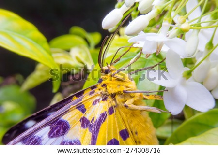 butterfly with flowers close up